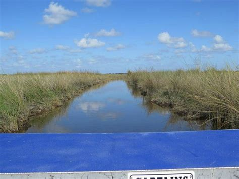 everglades boat rentals ochopee fl shelley s ride picture of wooten s everglades airboat