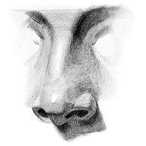 Sketches Nose by How To Draw A Nose Step By Step Proko