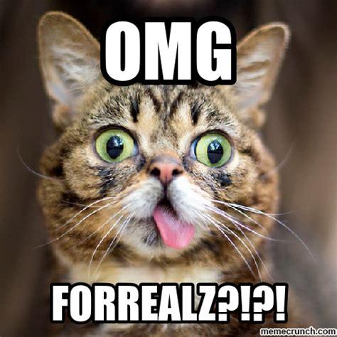 Lil Bub Meme - lil bub meme memes