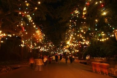 altadena lights tree route in altadena ca 91001 citysearch