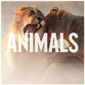 tiere decken animals maroon 5