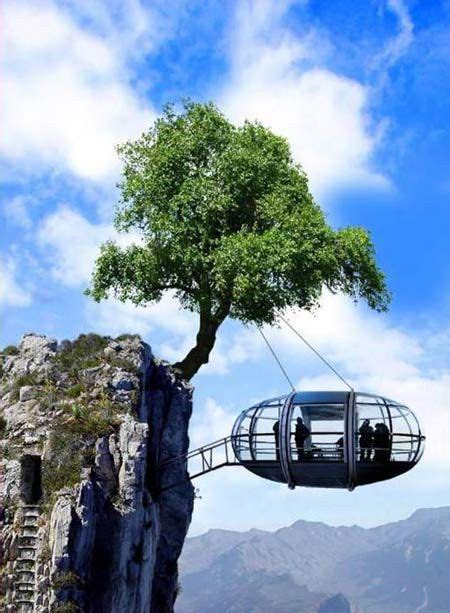 house held up by 1406359920 dangerous house held up by a tree1 jpg 450 215 613 pixels amazing green life tree