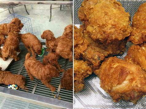 puppies that look like fried chicken 24 dogs that an uncanny resemblance to something else