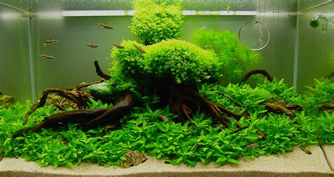 Aquarium Aquascapes by July 2010 Aquascape Of The Month Quot Anyplace Anytime