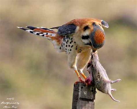 adam hays bird photographer