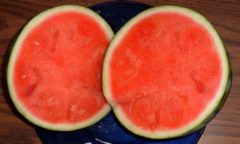 history of watermelon file watermelon seedless jpg wikipedia