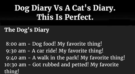 diary vs cat diary a s diary vs a cat s diary this is