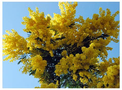 imagenes de flores y arboles fotos de flores arboles con flores