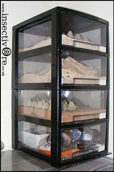 mealworm breeding box culture setup habitat livefood
