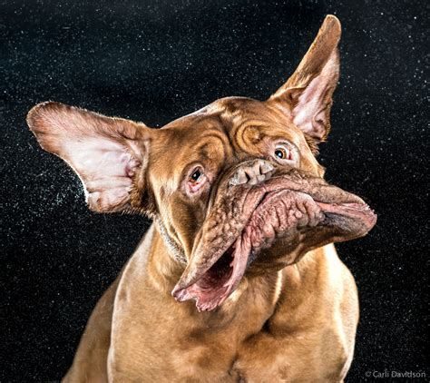 tremors in dogs shaking dogs frozen in mid slobber go from viral hit to thriving business wired