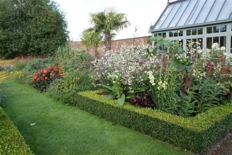 azalea da giardino azalea pianta piante da giardino caratteristiche dell