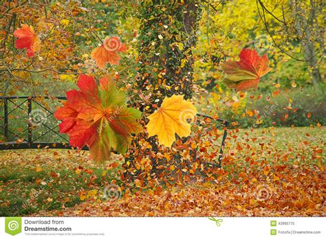 colorful leaves in autumn park stock photo image 43995775