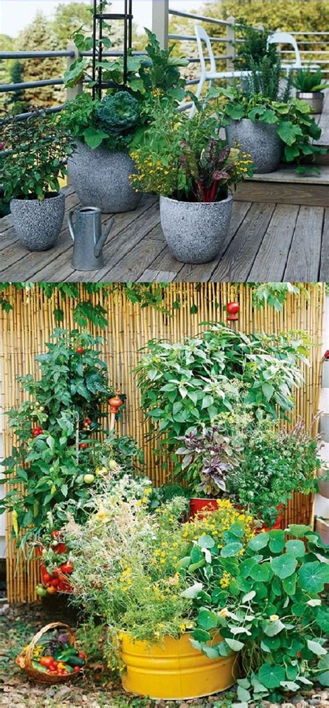 Winter Gardening Ideas Best Winter Container Gardening Ideas And Pictures 35 Awesome Indoor Outdoor