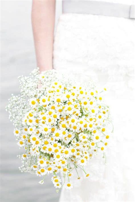 la margherita fiore la margherita un fiore perfetto per il vostro matrimonio