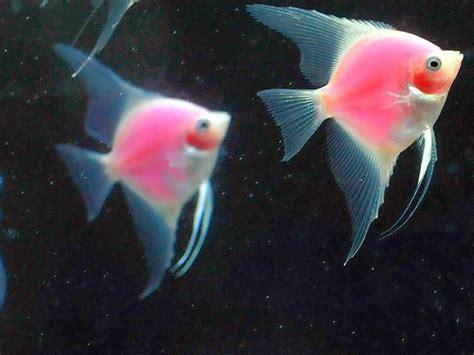 die fische  einem neuen aquarium zisch texte