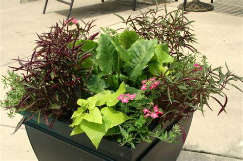 tropical container garden poolside tropical container garden outdoor pots and
