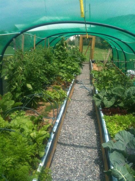 envy winter garden 17 best images about poly tunnel design on