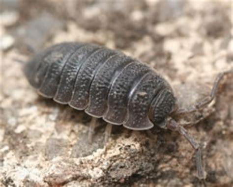 detritivore entomologists' glossary amateur