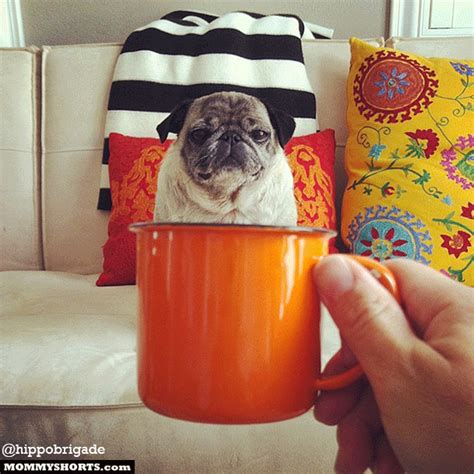 pug in a mug the week that included angry newborns lionel richie and a