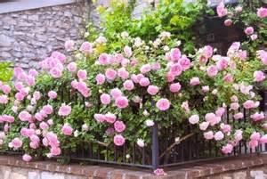 acquisto fiori comprare piante comprare piante fiorista comprare