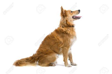 puppy profile profile search freelance logo design assets logos