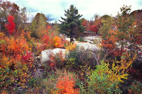 fall colors in maine fall colors in maine