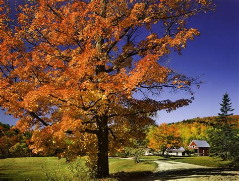 fall landscaping tips attract buyers with colorful fall landscaping ideas