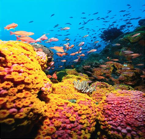 Coral Reef L by Coral Reef Hd Wallpapers Wallpaper202