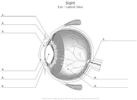 blank eye diagram blank diagram of the eye world of diagrams