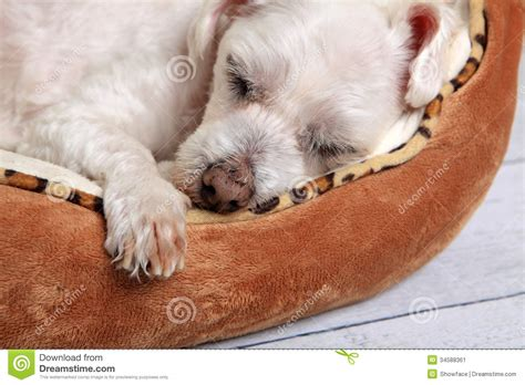 puppy sleeping in bed sleeping dog in pet bed stock image image of asleep