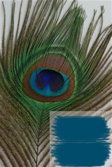 hue ology your weekly color inspiration peacock blue hue ology your weekly color inspiration peacock blue