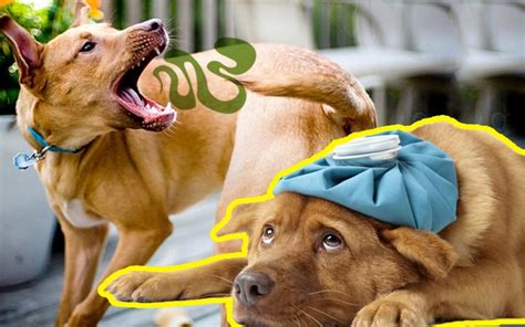 how to tell if puppy is sick dogsbreedscenter best breeds pictures information and reviews