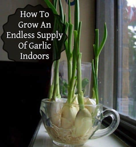 ways  create   indoor herb garden