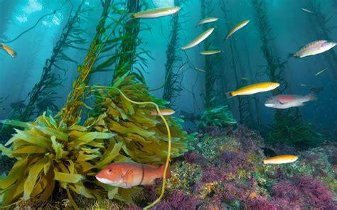 water fish water fish wallpaper 1232861