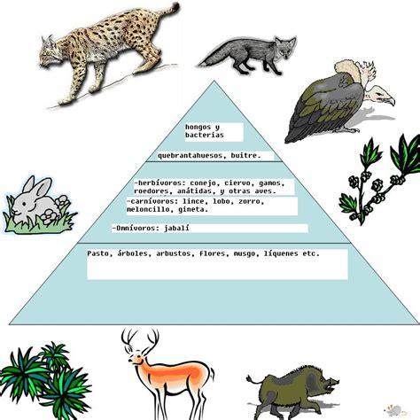 cadenas y redes y piramides alimenticias redes cadenas y pir 193 mides alimenticias geografia y