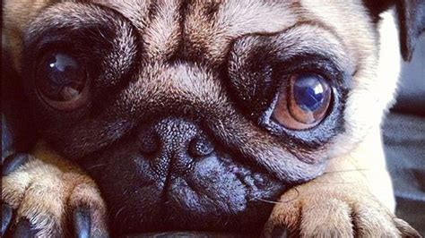 instagram dog 21 ridiculously cute dog and cat instagram pics