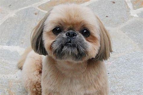 most adorable puppies the 21 most adorable puppies of 2014