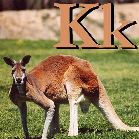 wikijunior animal alphabet u wikibooks open books for wikijunior animal alphabet k wikibooks open books for