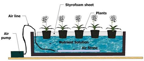 Benih Paprika Di Malang sistem hidroponik alat hidroponik