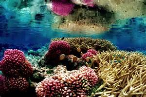 Pin Cartoon Coral Reef Pictures on Pinterest