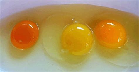 egg yolk color can you tell a healthy chicken from the egg yolk color