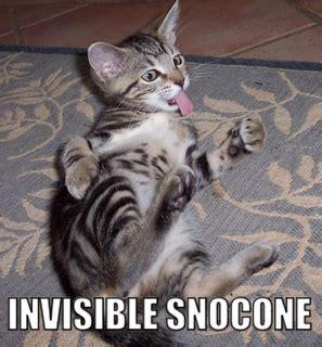 Invisible Cat Meme - invisible cat meme the trupanion blog
