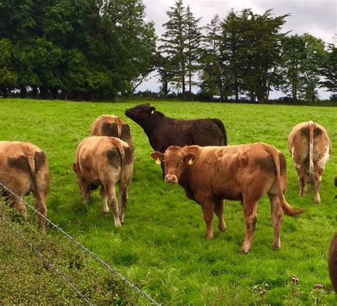 third shipment of weanlings to leave ireland for
