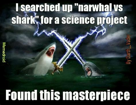 Narwhal Meme - memedroid images tagged as narwhal page 1