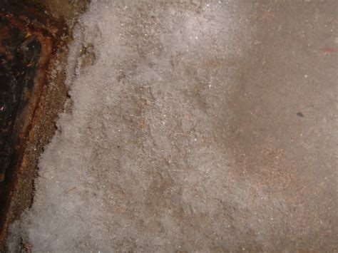 mold in basement mold and mildew in basement new basement and tile