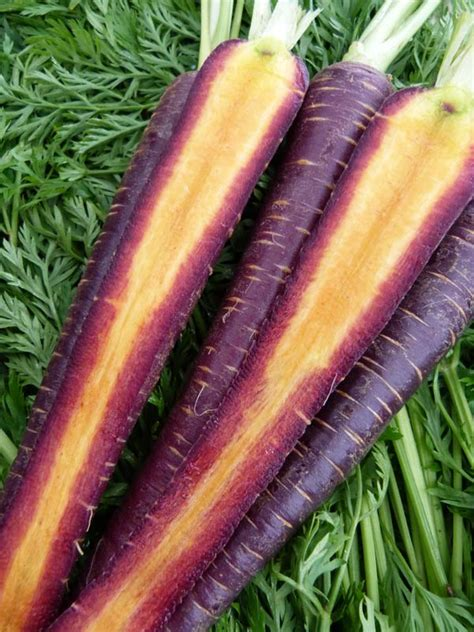carrot colors plant colorful carrots this
