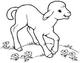 Sheep To Draw Colouring Pages Page 2 sketch template
