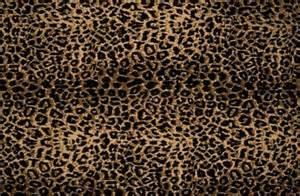 Cheetah print wallpaper home design ideas