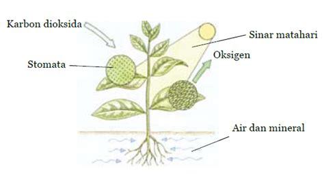cara membuat zpt tumbuhan tumbuhan hijau