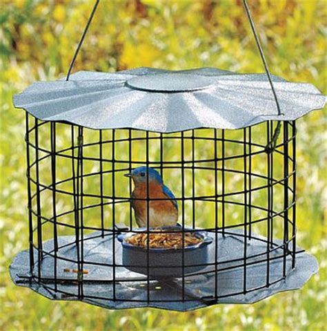 caged barrier guard multi feeder 4 barrier guarded bird